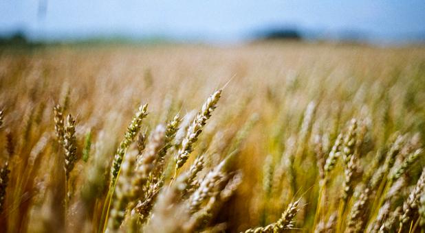 A Poem for Harvest